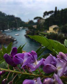 #portofino #flower #view #landascape #color #relax #inspiration #love