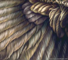 Google Image Result for http://www.henningludvigsen.com/images/uploads/tutorials/feathers-and-plumage-main.jpg
