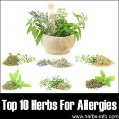 Top 10 Herbs For Allergies  - no idea how effective these are but I will be looking into it