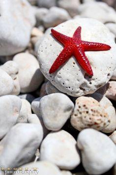 natures-garden: Star fish