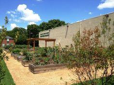 Baylor's community garden!