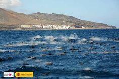 Erupción submarina Canarias 25