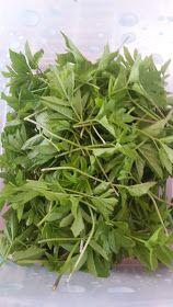 mój ogród warzywny: Podagrycznik w kuchni Vegetable Garden, Herbalism, Healthy Living, Food And Drink, Herbs, Vegetables, Plants, Herbal Medicine, Diet