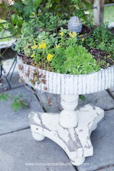Fill a pedestal planter with cold hardy sedums and hens and chicks