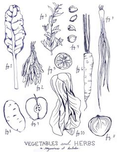 These veggies might be my inspiration for my food themed tattoos. Beautifully drawn by Alexis Rawlins on Etsy.