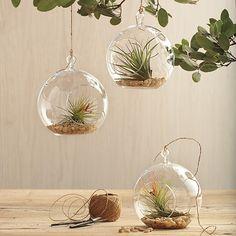 Glass Garden Globe, una nueva forma de tener tus plantas