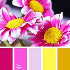bright pink, bright yellow, color match, color palette, color solution for home, crimson, fuchsia, mustard, Orange Color Palettes, pale violet, pink and yellow, Yellow Color Palettes.