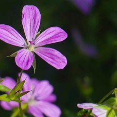 #polonezköy #doğa #makro #macro #rose #flower ##flowerstagram #instagram #photography #photooftheday #best #bestoftheday #canon #photo #followme