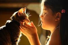 Four Life Lessons Cats Can Teach Your Kids