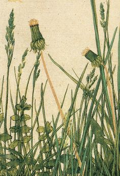 Durer 'Great Piece of Turf' (detail) 1503.  Watercolor and gouache by Plum leaves, via Flickr