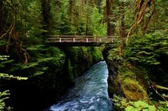 Nine Hikes to stay cool around the Olympic National Park - The Outdoor Society