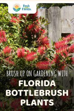 Tropical Landscaping, Tropical Garden, Backyard Landscaping, Florida Landscaping, Herb Garden, Lawn And Garden, Garden Plants, Flower Gardening, Florida Plants