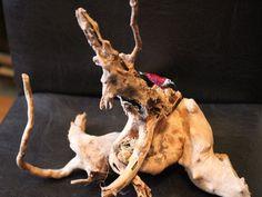 Mangroven - Fingerwurzel - Echtholz - Versteck - Aquathier | eBay