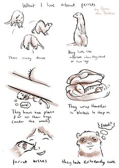 "What I love about ferrets by ""PETRA VAN BERKUM"""