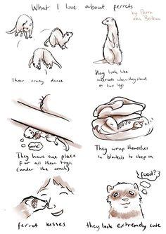 "What I love about ferrets by ""PETRA VAN BERKUM"""