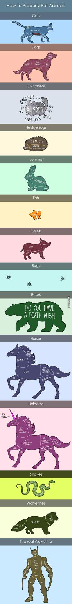 How to pet animals... (by Adam Ellis) - 9GAG