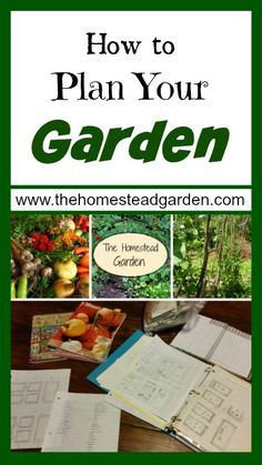 How to Plan Your Garden: