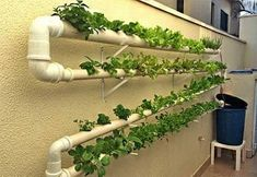 Have you heard of aquaponics? Aquaponics Combines the Growing of Fish and Plants You may grow plants in water and without soil and once one does this together with growing fish you are practicing aquaponics. Hydroponic Gardening, Hydroponics, Aquaponics Plants, Permaculture, Farm Gardens, Outdoor Gardens, Diy Hydroponik, Aquaponics System, Urban Farming