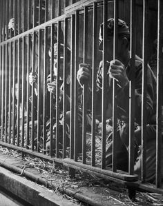 The liberated people of Antwerp show their feelings towards German prisoners and Belgian collaborators by locking them in the zoo lion cage, 1944. IWM