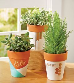Breath new life into your old potted plants with this painted pot project on Joann.com!