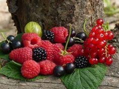 Создаем ягодный сад с плодовыми кустарниками: все от саженцев до урожая и обрезки