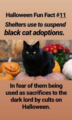 Halloween Halloween Fun Facts, Halloween Treats, Halloween House, Halloween Night, Black Cat Adoption, Celtic Festival, Chicken Feed, A Child Is Born, William Shatner