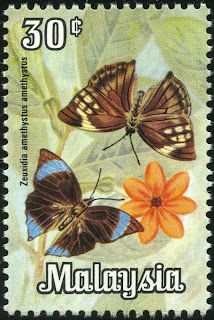30¢. Zeuxidia amethystus