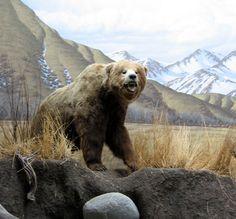 Grizzly Bear Grizzly Bear Grizzly Bear