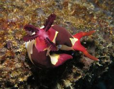 Nudibranch by Timothy Willis, via Flickr