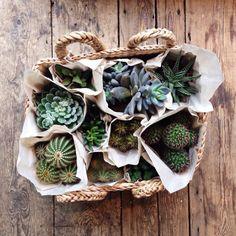 grafika plants, cactus, and green Cacti And Succulents, Planting Succulents, Planting Flowers, Air Plants, Indoor Plants, Green Plants, Nature Plants, Green Nature, Veggie Gardens