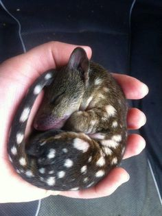 Meet The Tiniest Polka-Dotted Animal In The World