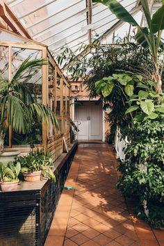 Flowers Perennials, Planting Flowers, Flower Gardening, Birmingham Botanical Gardens, Bonsai Styles, Greenhouse Gardening, All Nature, Garden Boxes, Exotic Plants