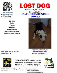 Lost Dog - Pit Bull - Pensacola, FL, United States