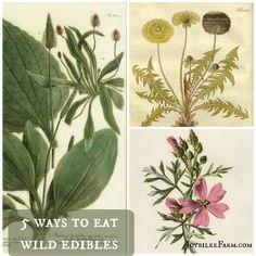 5 ways to eat wild edibles