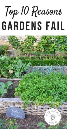 Find out why gardens fail and what you can do to make them better. Great tips for gardening to get the best harvest.