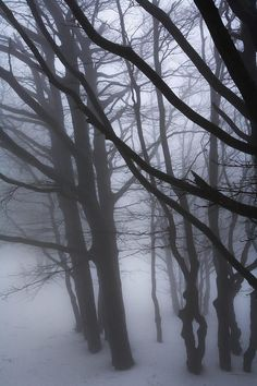 Foggy Trees by Laura Jelenkovich