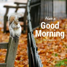 Good morning image with cute animal