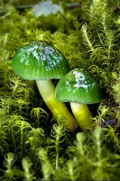 nice Mushrooms & Fungi