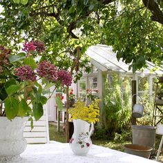 Vacker men blåsig morgon i huvudstaden☀️ Önskar er en fin tisdag #trädgård #garden #mygarden #mygardentoday #skönahem #greenhouse #orangeri #myhome #blommor #flowers #flowerlovers #lantligt #vintagehome #vintagestyle #sommar #augusti #august