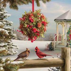 2018/01/09 Cardinals and Mistletoe