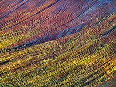 Autumn in Alaskan tundra