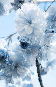 Blue Flower Wallpaper, Blue Wallpaper Iphone, Blue Wallpapers, Pretty Wallpapers, Aesthetic Iphone Wallpaper, Nature Wallpaper, Wallpaper Art, Wallpaper Backgrounds, Pastel Wallpaper