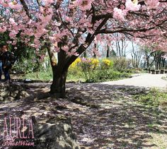 Setagayapark Vienna – Reading A Japanese Garden Vienna, Japanese, Reading, Spring, Garden, Plants, Garten, Japanese Language, Gardening