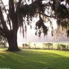 40 Best Zephyrhills FL United States images
