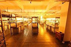 1000 Watt High Pressure Sodium HPS Grow Light Bulbs Lamp / 1 X Bulb Size: 1000, Model: HPS1000WattGrow , Home & Outdoor Store