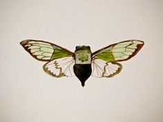 Cicada No.1