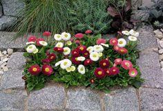 My Favorite Garden Design Vintage Outdoor Decor, Bellis Perennis, Galaxy Wedding, Container Gardening, Gardening Tips, Christmas Table Settings, Pastel Flowers, Garden Theme, Winter Garden