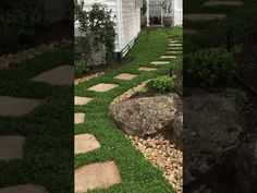 Plant Tiles of native ground cover Dichondra repens were used for an ins... Garden Paths, Being Used, Stepping Stones, Nativity, Tiles, Sidewalk, The Creator, Australia, Cover