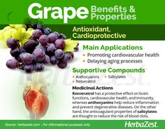 Grape is one of the most identifiable plants in the world. Read on to learn why it has been a staple of human health and happiness for centuries. Grape Nutrition, Health And Nutrition, Grape Health Benefits, Healthy Life, Healthy Eating, Coffee Ingredients, Herbal Medicine, Herbal Remedies, Herbalism