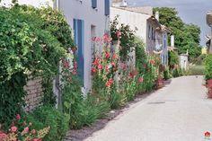 ... Talmont-sur-Gironde rue fleurie ...